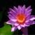 LOVEEDE