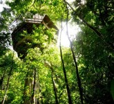 experience_treehouse_living_in_forested_costa_rica_resor_05