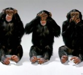 Three-Wise-Monkeys-wild-animals-3311014-1024-768-630x472