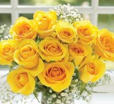 12 yellow rose vase